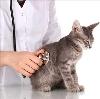 Ветеринарные клиники в Усть-Куте